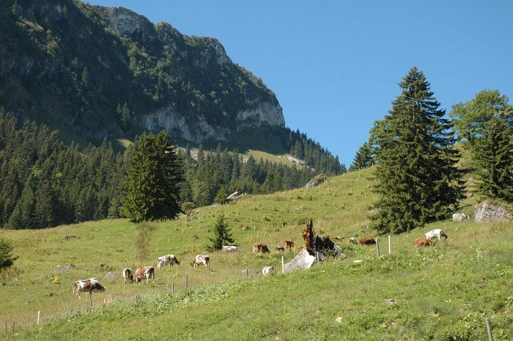 Alpages du chalet