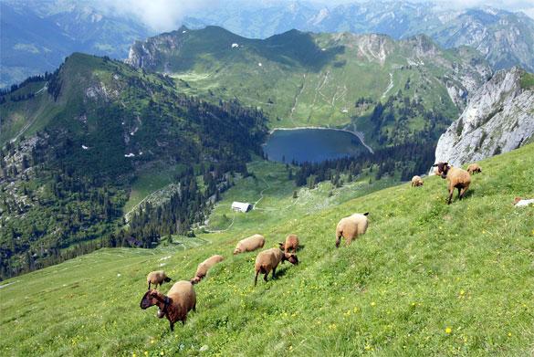 Vue sur le chalet Oberstockenalp
