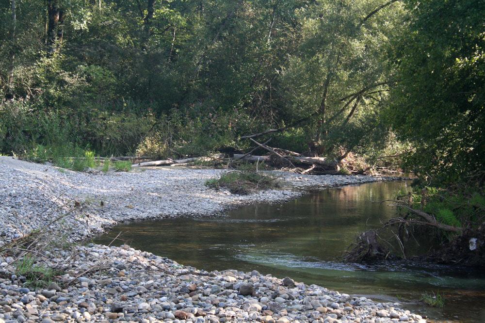 Rivière au libre cours