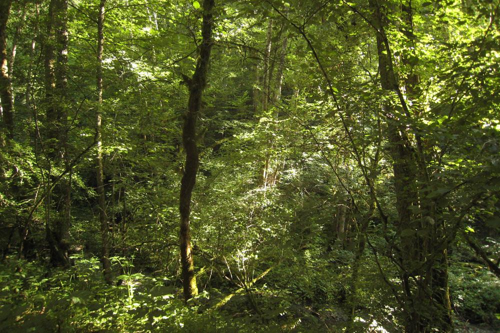 Forêt de la Roulavaz