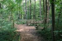 Sentier des Faînes - La Forêt enchantée - Boncourt