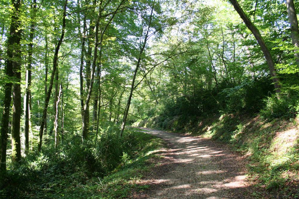 Sentier forestier dans la forêt de Boncourt