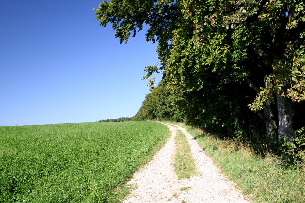 Chemin agricole à Lajoux