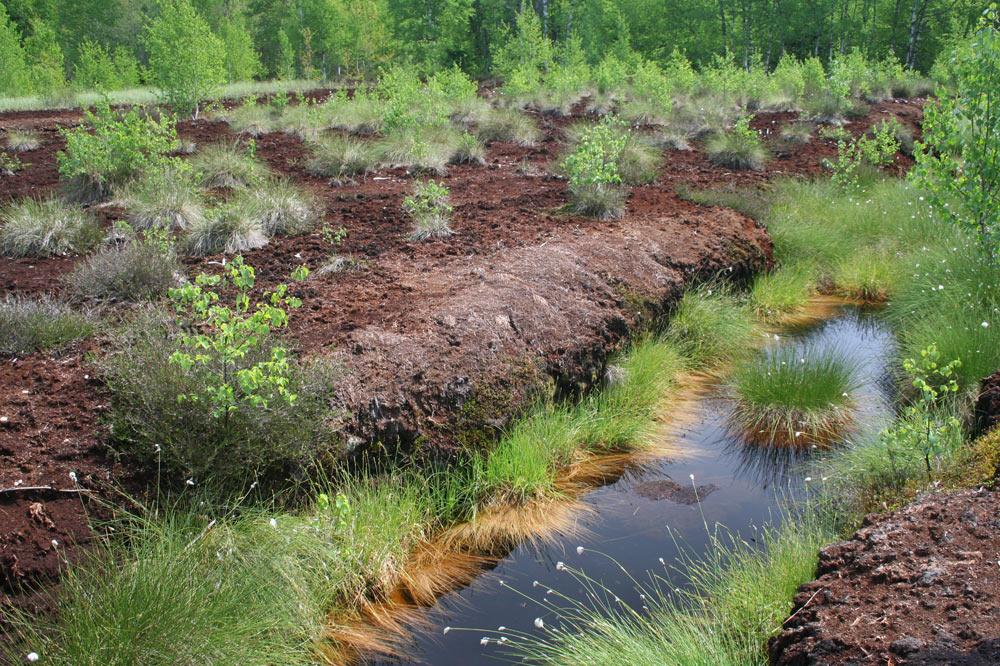 Ancien canal de drainage