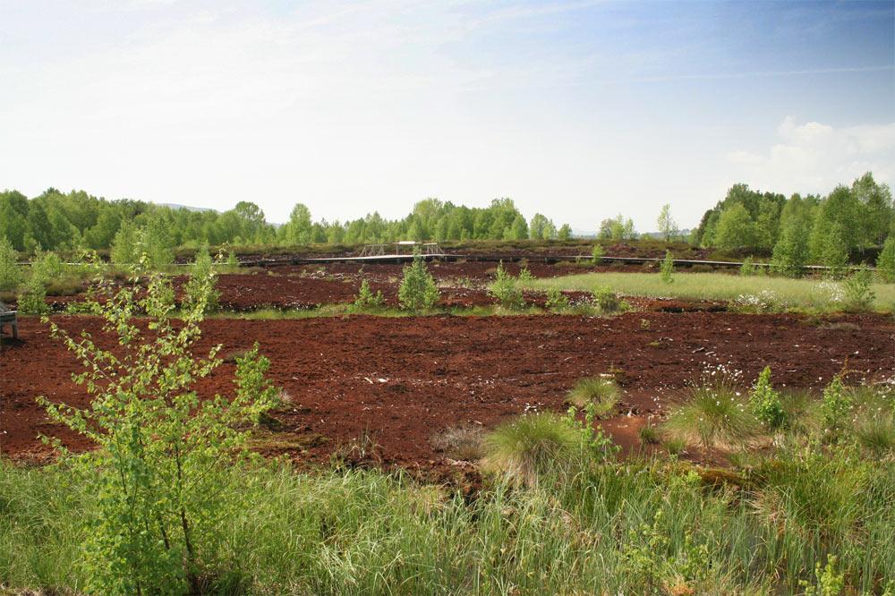Ancienne surface d'exploitation de la tourbe à des fins horticole