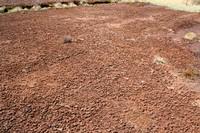 Ancienne surface d'exploitation de tourbe horticole