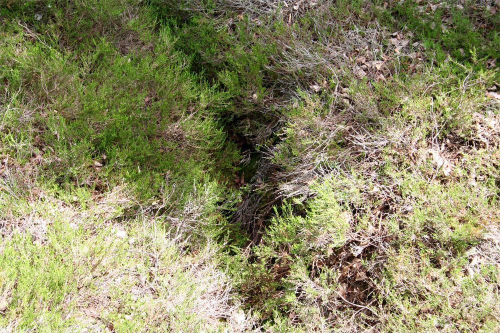 Fossé de drainage