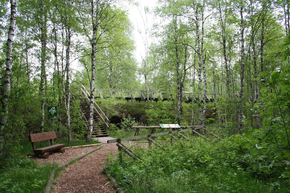 Sentier didactique de la tourbière