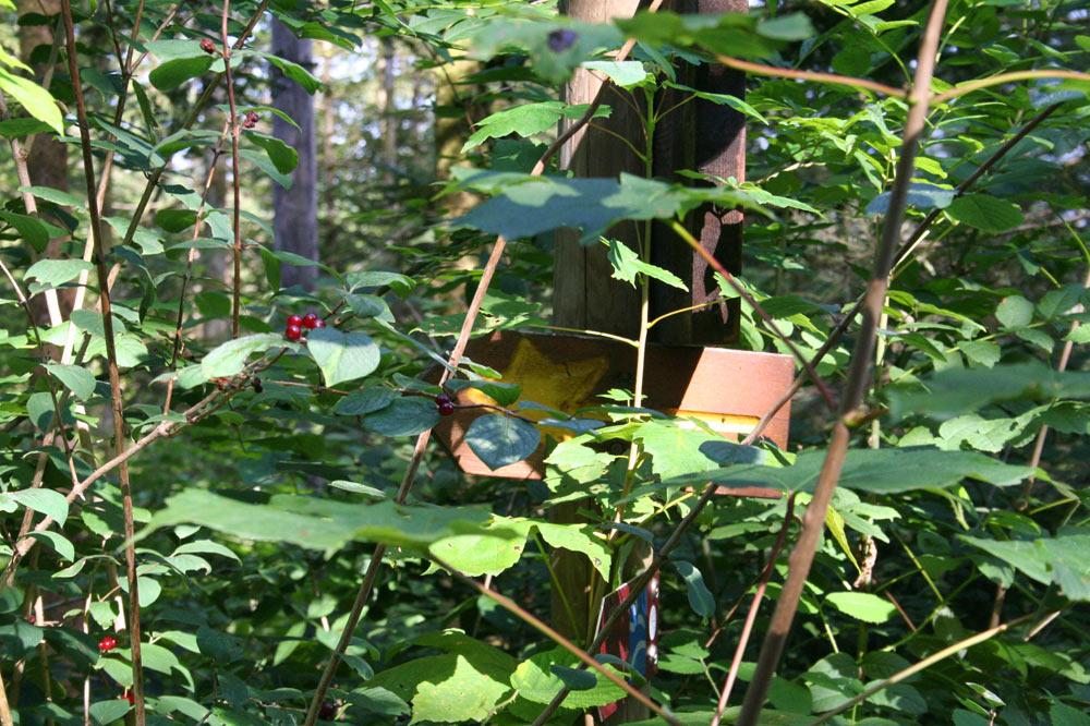 Balisage du sentier de la forêt jardinée