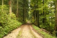 Chemin forestier de l'Envers
