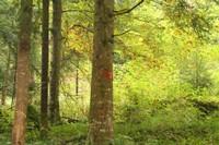 Marques des divisons forestières