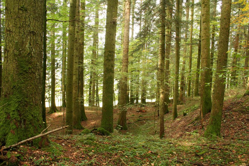Forêt traditionnelle abandonnée
