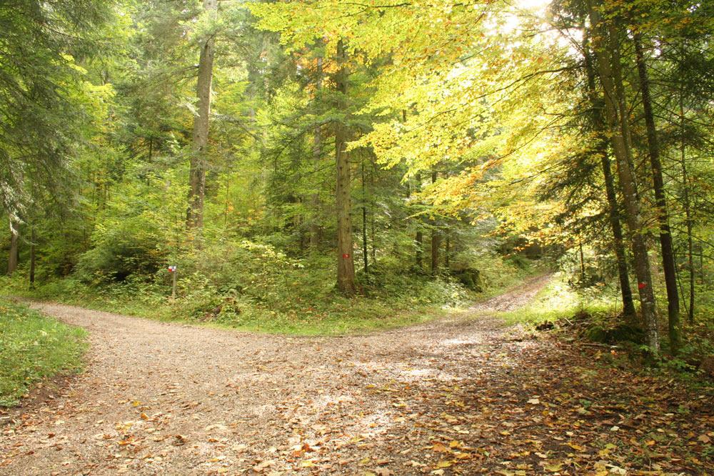 Réseau de chemins forestiers dans la forêt jardinée