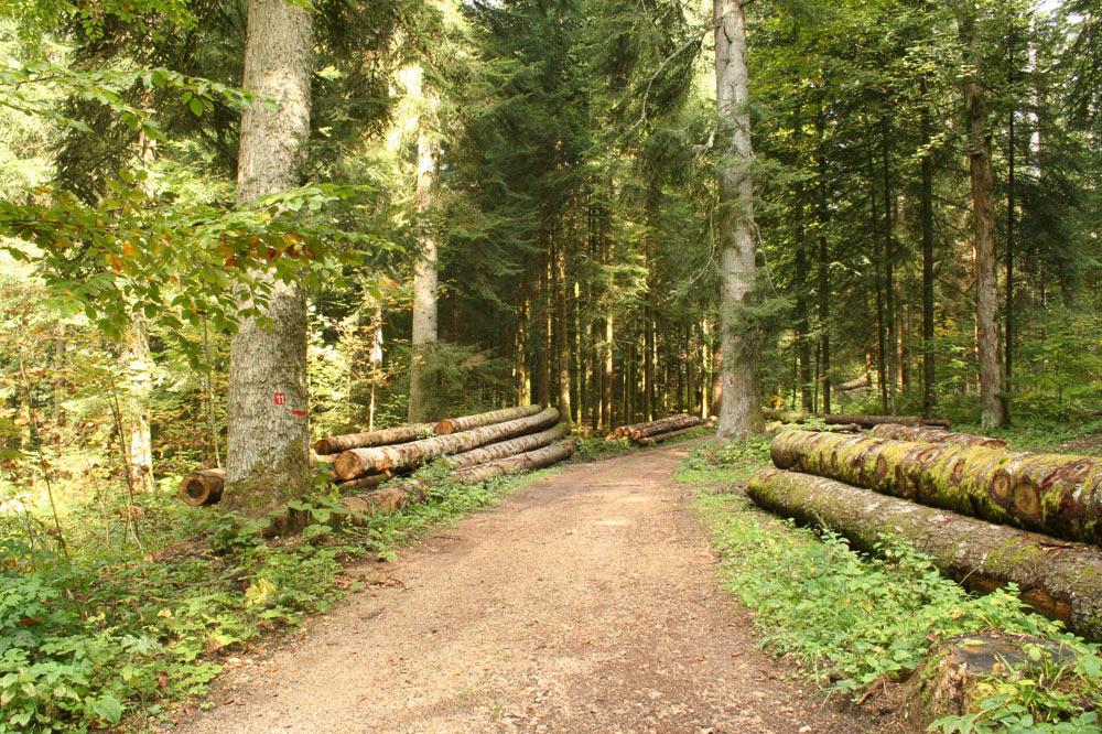 La forêt jardinée offre un rendement constant