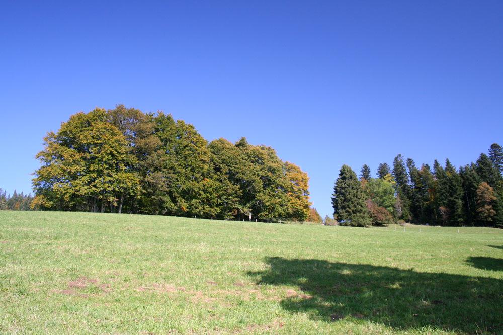 Paysage sur les flancs de la vallée des Ponts-de-Martel
