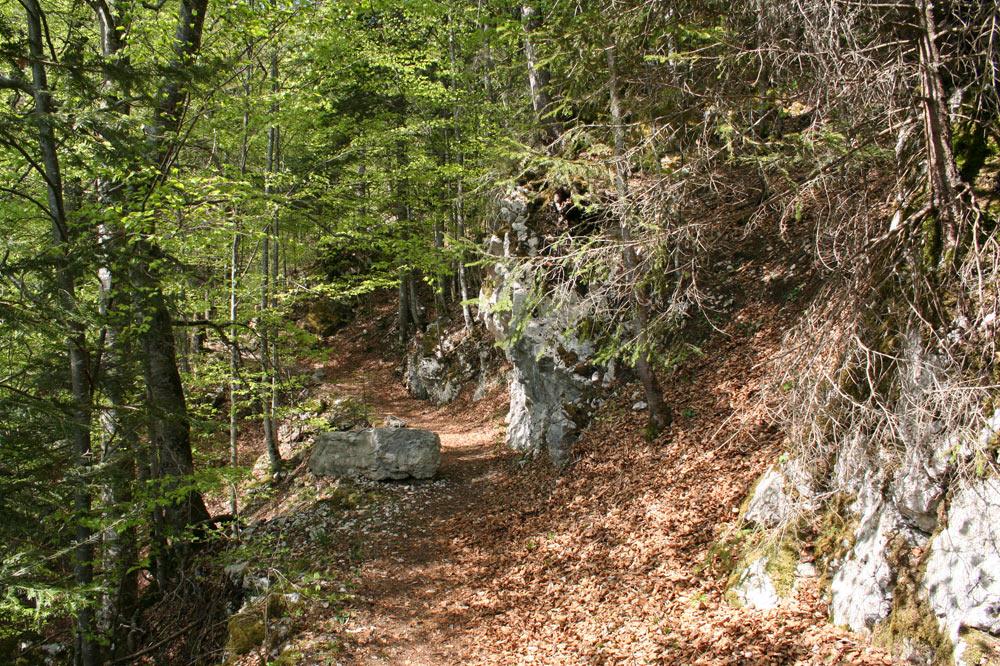 Sentier forestier aux Ponts-de-Martel