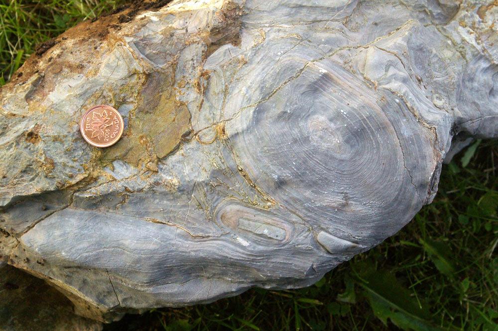 Stromatolithes fossiles