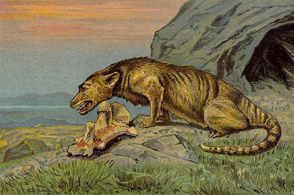 Mesonyx
