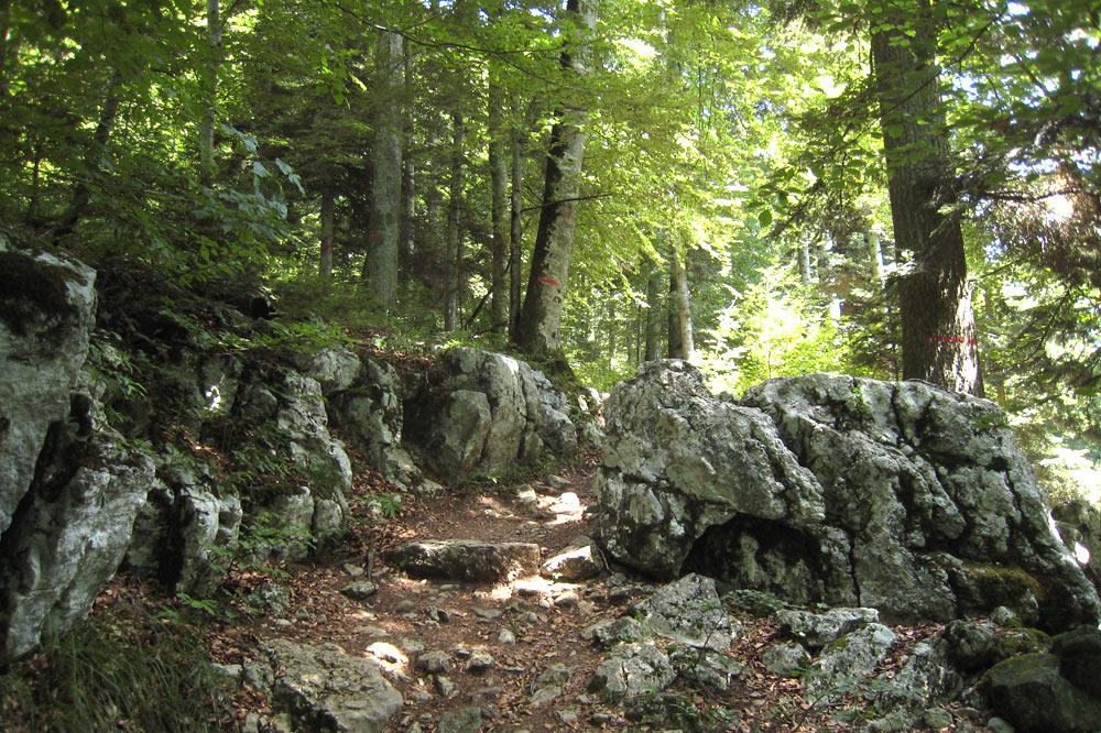Roches calcaires sur le Sentier du Temps