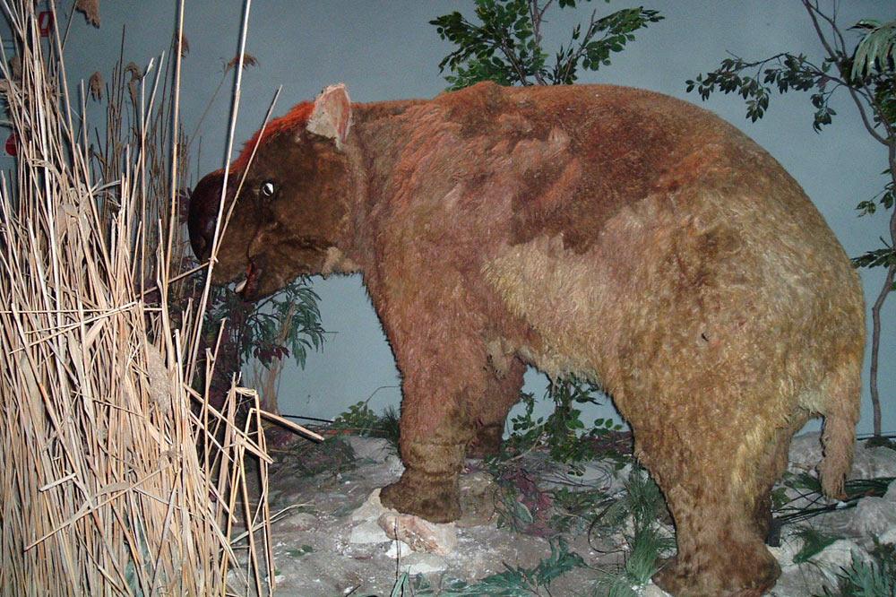 Représentation de diprotodon