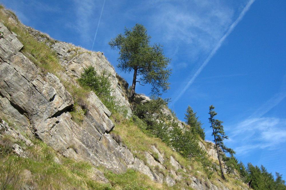 Arbre accroché à la montagne
