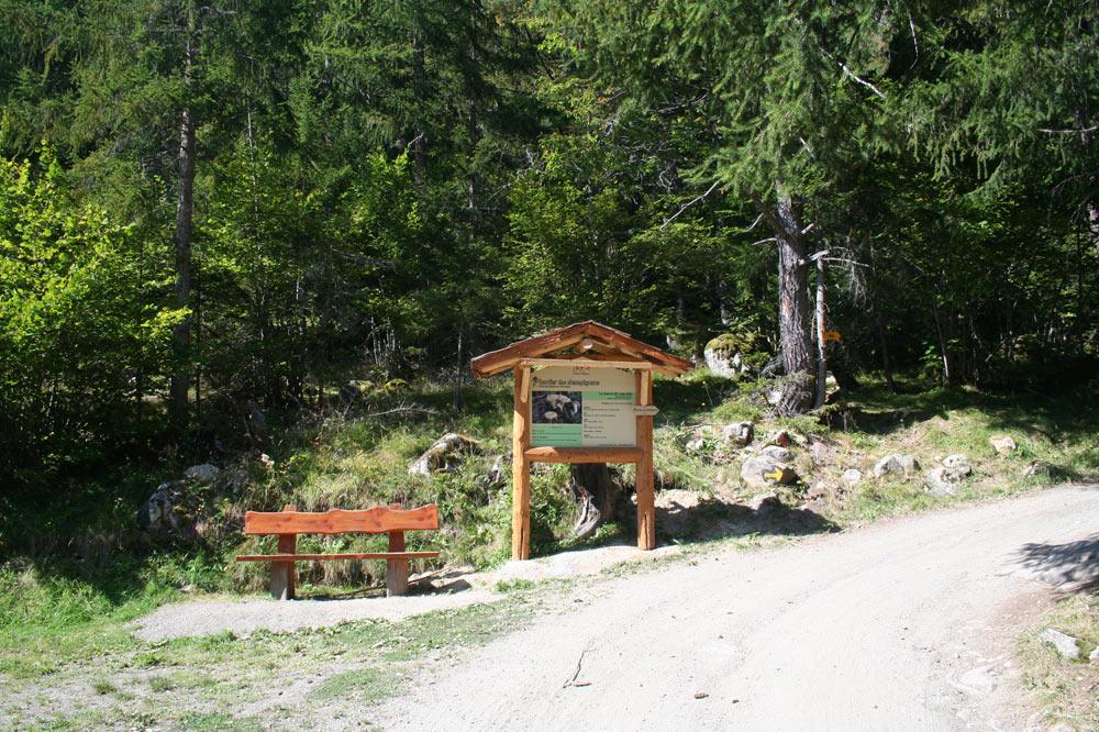 Panneau du sentier des champignons