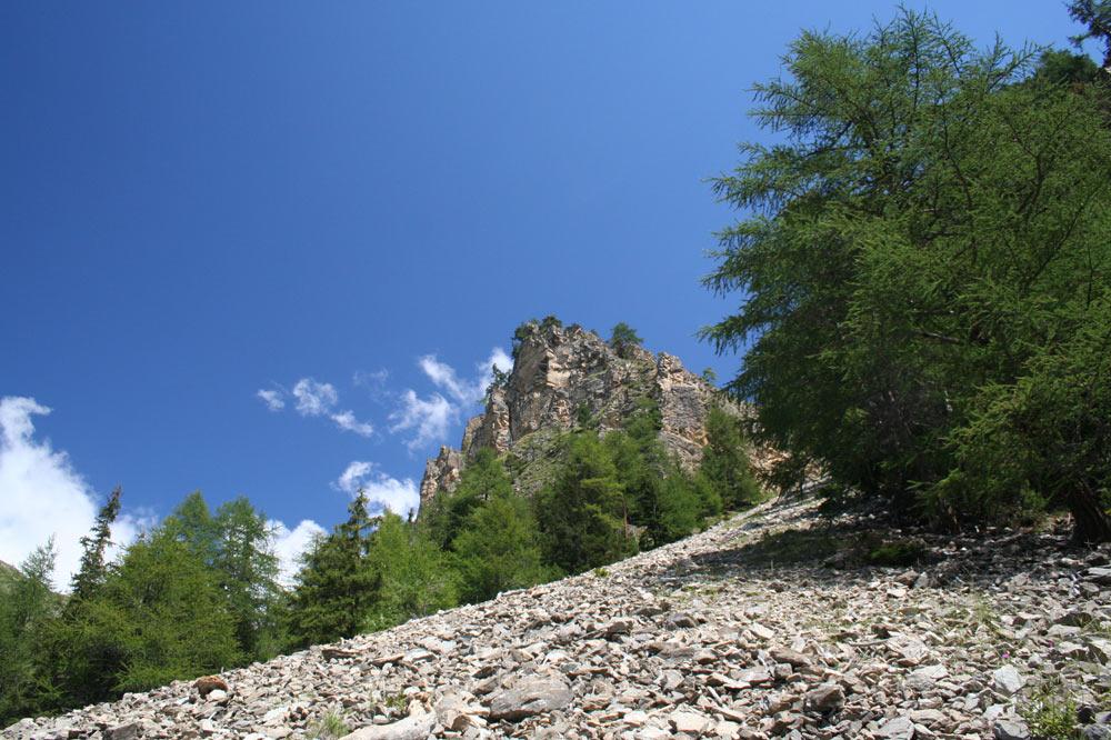 Eboulis dans une forêt au dessus d'Evolène