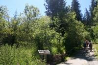 Poste: A la rencontre des arbres feuillus