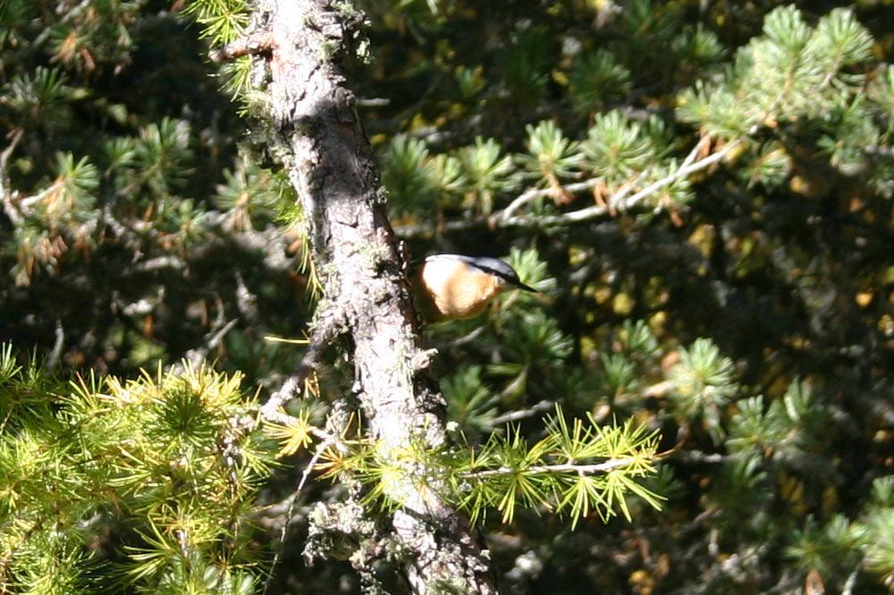 Les oiseaux excellent dans l'art du camouflage en forêt