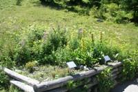 Plantes des pâturages