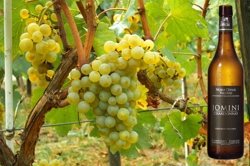 Chardonnay - Chardonnay