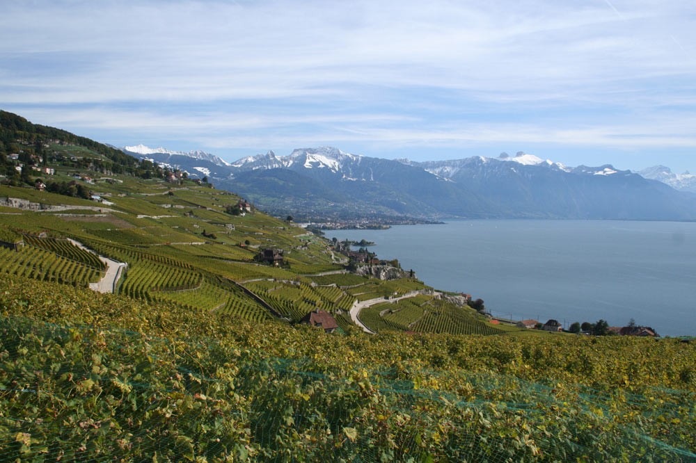 Vignoble de Lavaux et préalpes