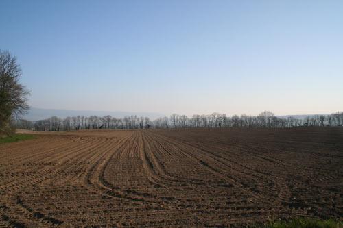 Terres agricoles issues des marais asséchés