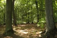 Bois de Sauvabelin