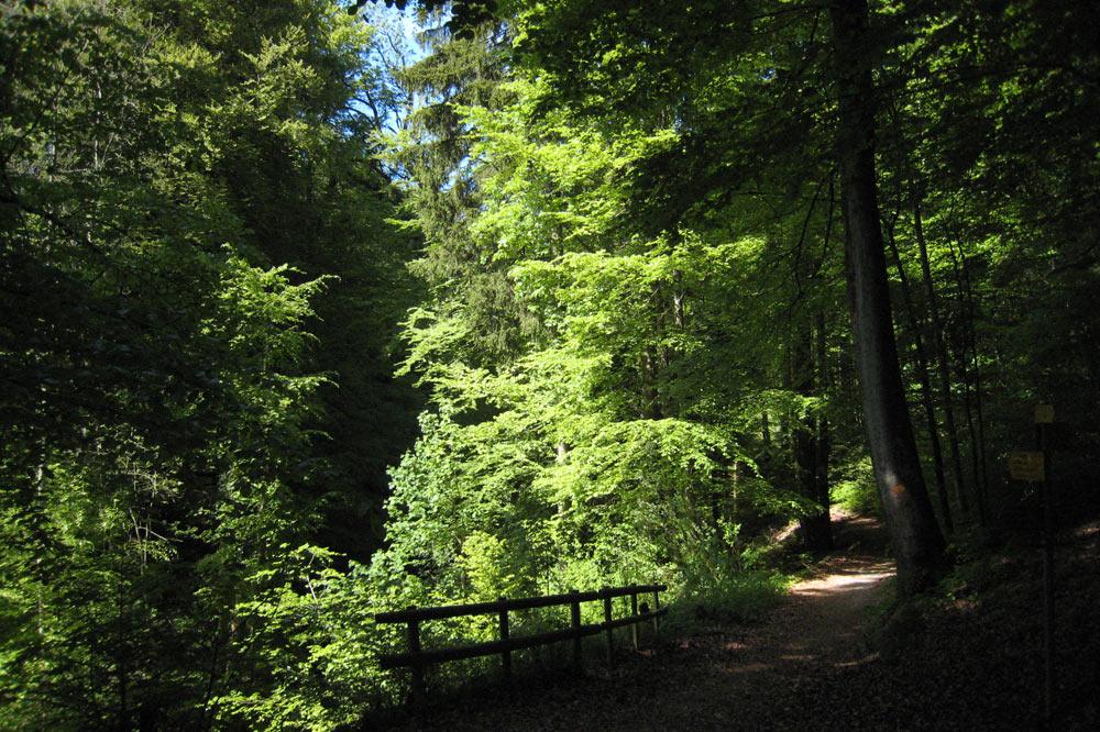 Chemin forestier, Lausanne