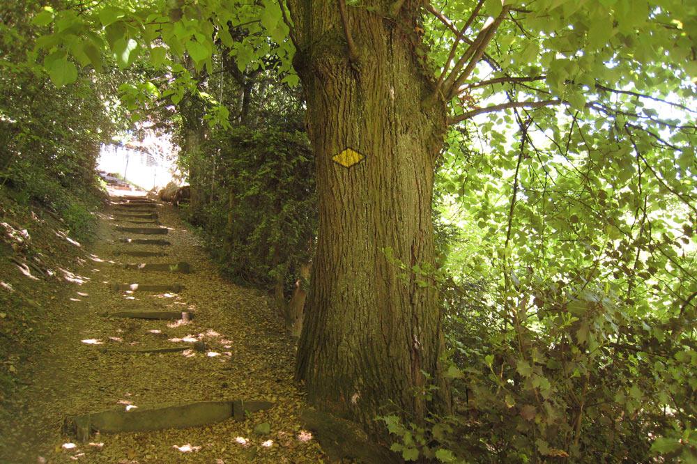 Escaliers entre la Riponne et l'Hermitage
