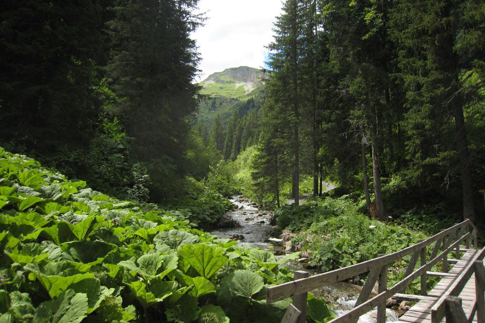 Sentier des ponts de Morgins