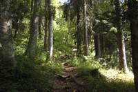 Chemin forestier sur le sentier des alpages