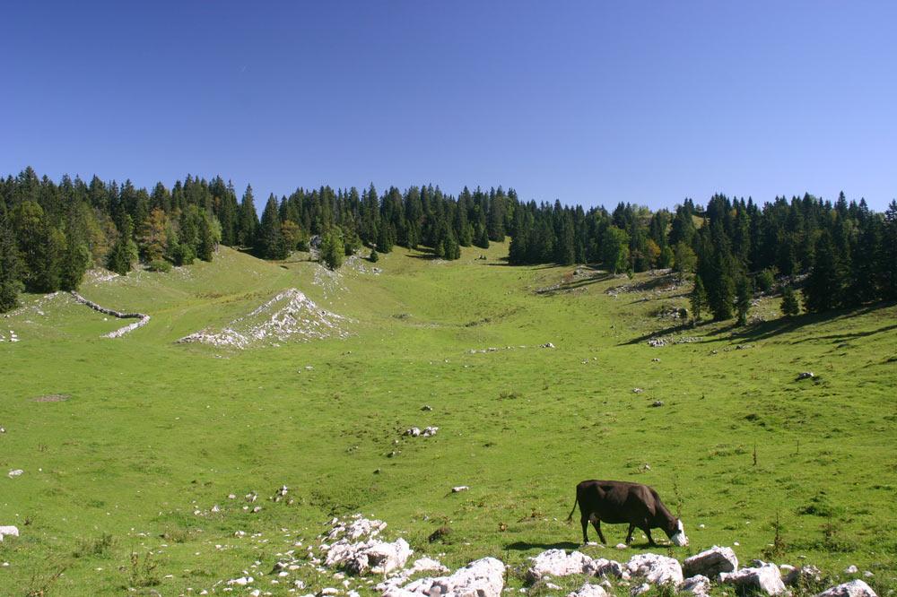 Alpage de l'Arzière