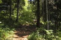 Sentier forestier (Bassins)