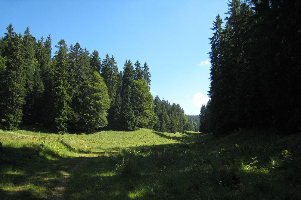 Alpage situé en dessosu de la forêt des Gilles