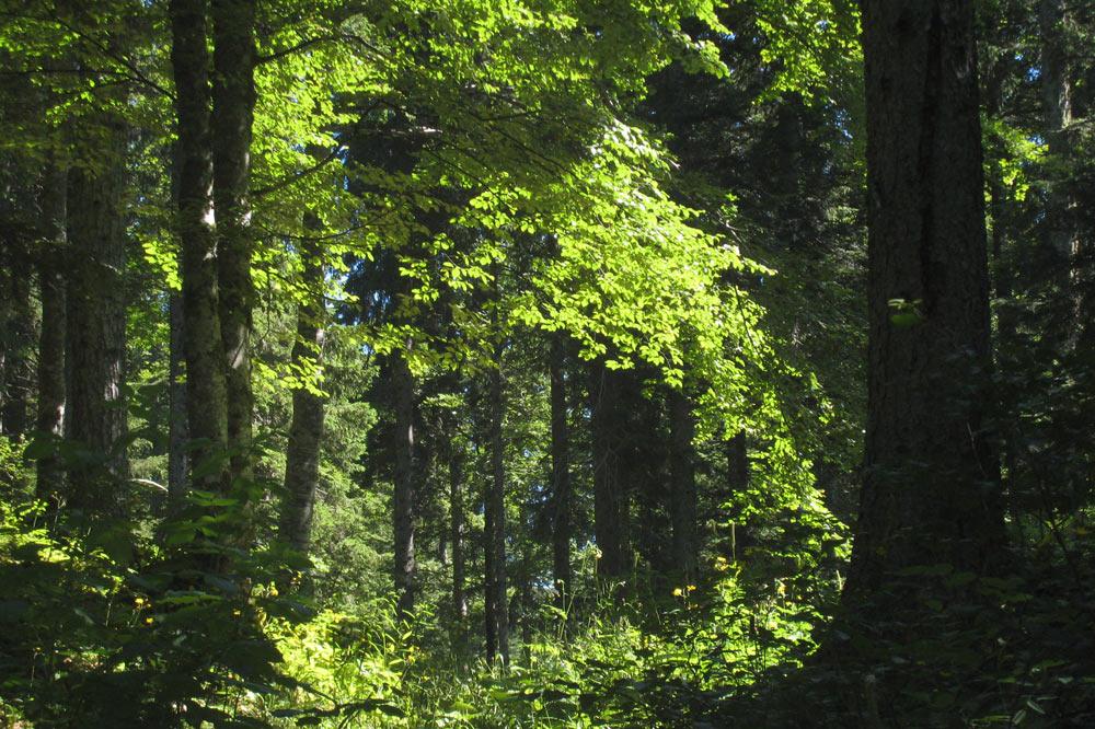 Chemin forestier sur le tour panormaique de la commune de Bassins